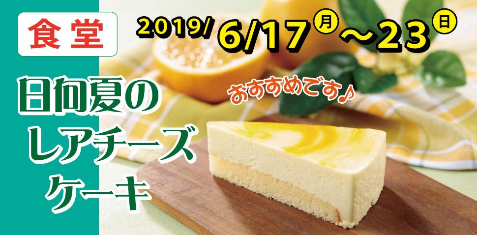 食堂 日向夏のレアチーズケーキ